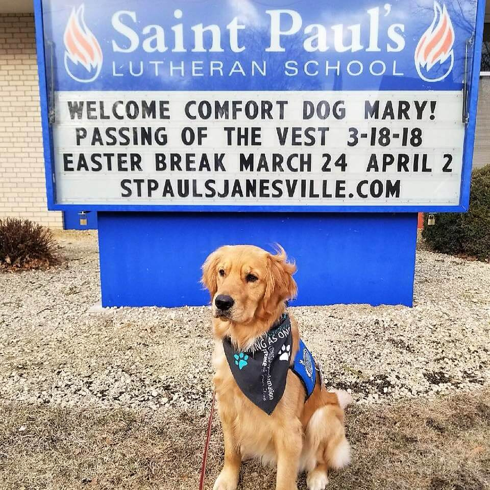 Mary the Comfort Dog
