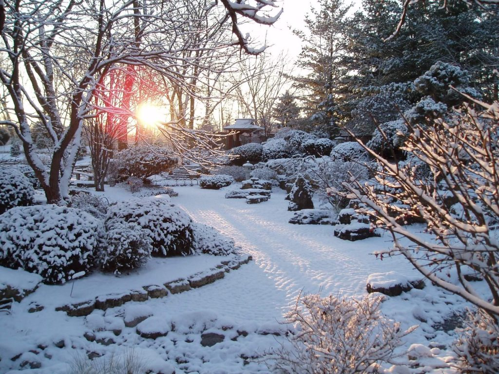 RBG Japanese Garden in Winter